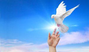 south florida white dove release